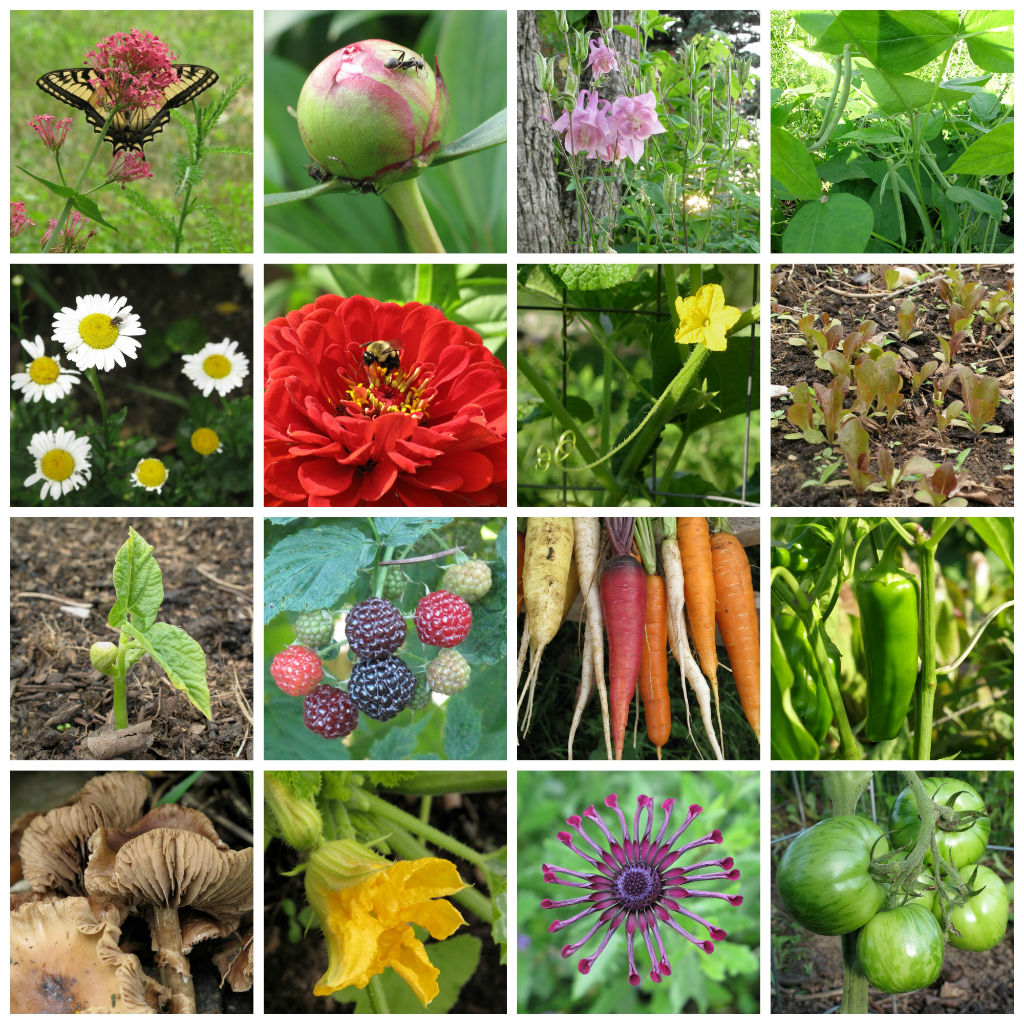 flowers and vegetables from my Vermont garden, Floral Artistry