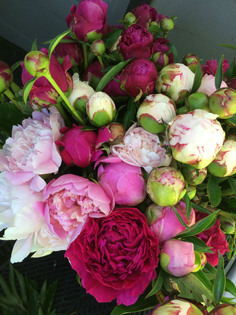 photo of peonies grown in Vermont