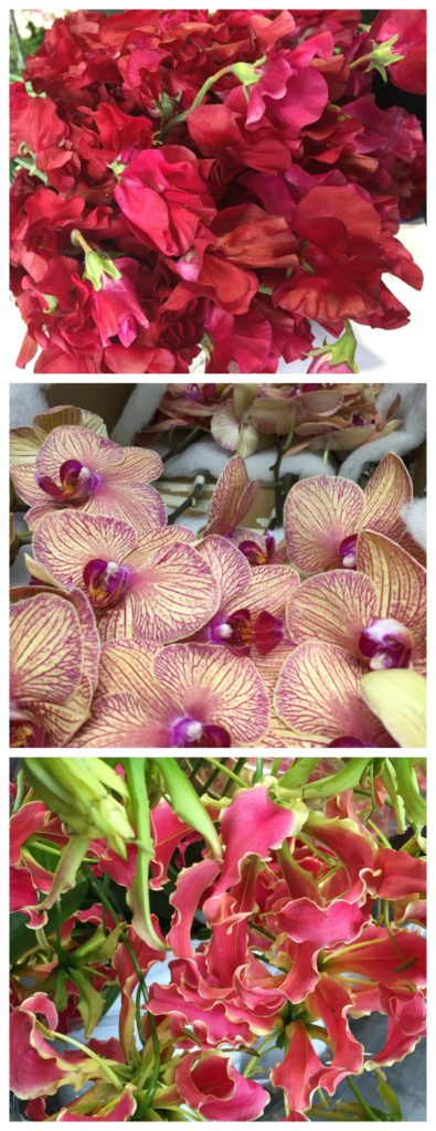sweet peas orchids gloriosa
